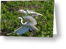 Great Egret In Flight Greeting Card