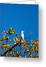 Great Egret On Watch Greeting Card