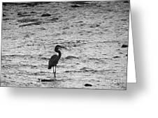 Great Grey Heron Silhouette Greeting Card