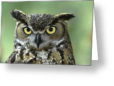 Great Horned Owl Bubo Virginianus Greeting Card