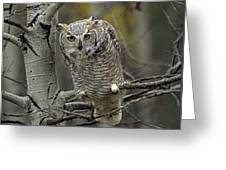 Great Horned Owl Pale Form Kootenays Greeting Card