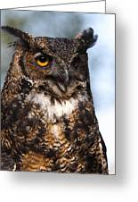 Great Horned Owl Portrait Greeting Card