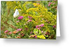 Great Southern White Butterfly Likes The Pink Flowers Greeting Card