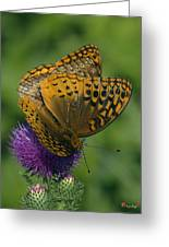 Great Spangled Fritillaries On Thistle Din108 Greeting Card
