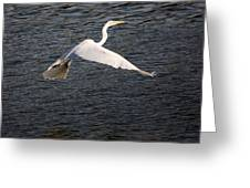 Great White Egret Flight Series - 10 Greeting Card