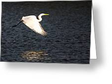 Great White Egret Flight Series - 11 Greeting Card