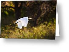 Great White Egret Flight Series - 5 Greeting Card