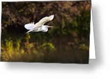 Great White Egret Flight Series - 6 Greeting Card