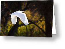 Great White Egret Flight Series - 7 Greeting Card