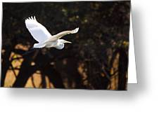 Great White Egret Flight Series - 8 Greeting Card