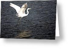 Great White Egret Flight Series - 9 Greeting Card