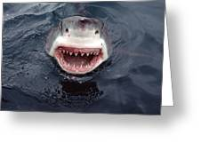 Great White Shark Smile Australia Greeting Card by Mike Parry