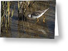 Greater Yellowlegs At Spi Greeting Card