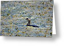 Grebe In Green Greeting Card