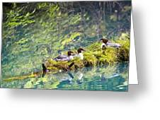 Grebe Podicipedidae Birds Sitting On A Greeting Card