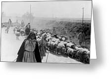 Greece Shepherds And Flocks - C 1909 Greeting Card by International  Images