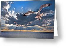 Greek Gulls With Sunbeams Greeting Card