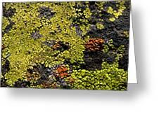Green Algea Greeting Card