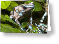Green And Black Poison Frog Greeting Card