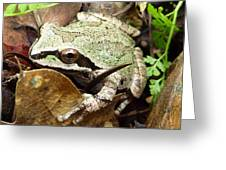 Green And Brown Frog Greeting Card