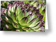 Green And Red Succulent Greeting Card