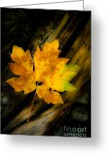 Green And Yellow Maple Leaf In Soft Focus Rests On A Log. Greeting Card