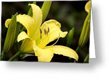 Green And Yellow - Lily Greeting Card