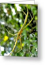 Green Argiope  Greeting Card