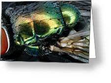 Green Blow Fly Greeting Card