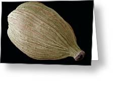 Green Cardamom Pod, Sem Greeting Card by Steve Gschmeissner