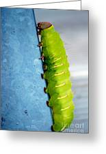 Green Caterpillar  Greeting Card