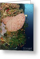 Green Coral With Red Fish And Pink Greeting Card