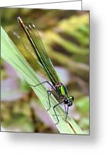 Green Damselfly Greeting Card by Ramona Johnston