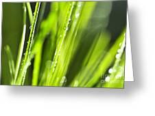 Green Dewy Grass  Greeting Card by Elena Elisseeva