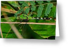 Green Dragonfly At Pond - 51006573f Greeting Card