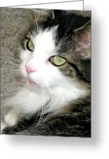 Green-eyed Cat Greeting Card