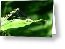 Green Eyes Of Hope Greeting Card