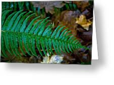 Green Fern Greeting Card