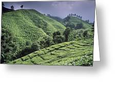 Green Fields On Hills Greeting Card