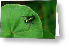 Green Fly Greeting Card
