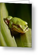 Green Frog 2 Greeting Card