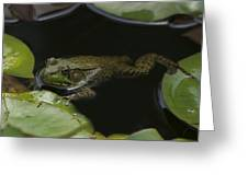 Green Frog And Lily Pads 9613 Greeting Card