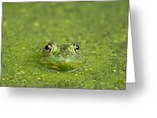 Green Frog Eyes Greeting Card