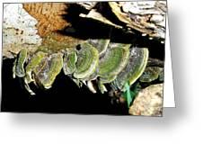 Green Fungi Greeting Card