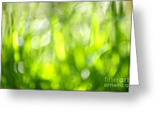Green Grass In Sunshine Greeting Card by Elena Elisseeva