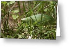 Green Green Greeting Card