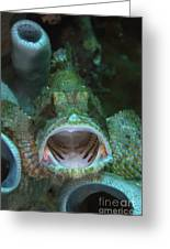 Green Grouper With Open Mouth, North Greeting Card