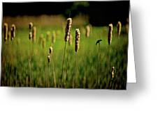 Green Grow The Rushes O Greeting Card