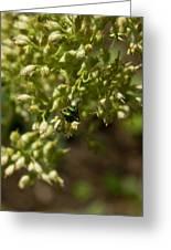 Green Helicid Bee 6 Greeting Card