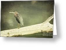 Green Heron On A Log Greeting Card